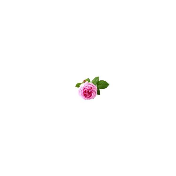 AQUA OLEUM Rose maroc 5%